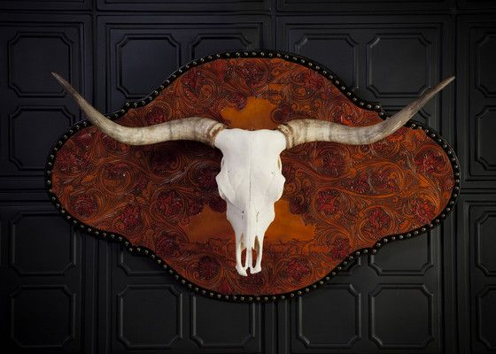 173 Best Images About Longhorns On Pinterest Horns Texas