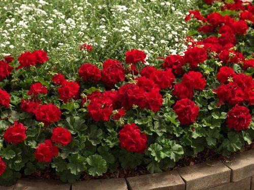 49 Best Images About Garden Ideas On Pinterest Garden Ideas