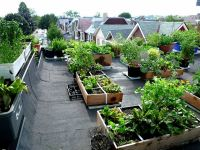 17 Best images about Urban Garden | Roof-top Vegetable ...