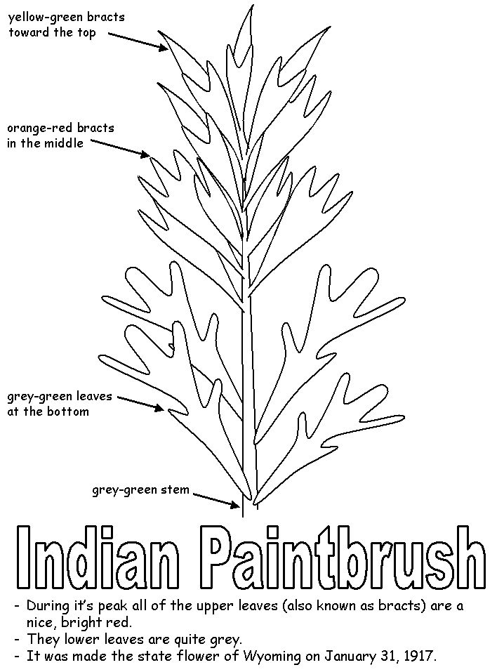 29 best images about Legend of the Indian Paintbrush on