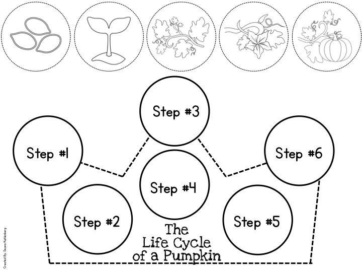 17 Best images about Life Cycle of a Plant on Pinterest