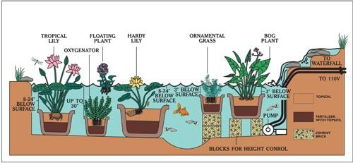 Cutrine Water Garden And Pond Setup Diagram Garden Gardening