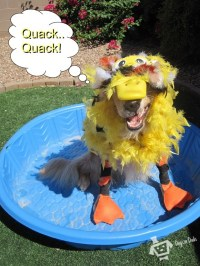 67 best images about Dog halloween costumes on Pinterest ...