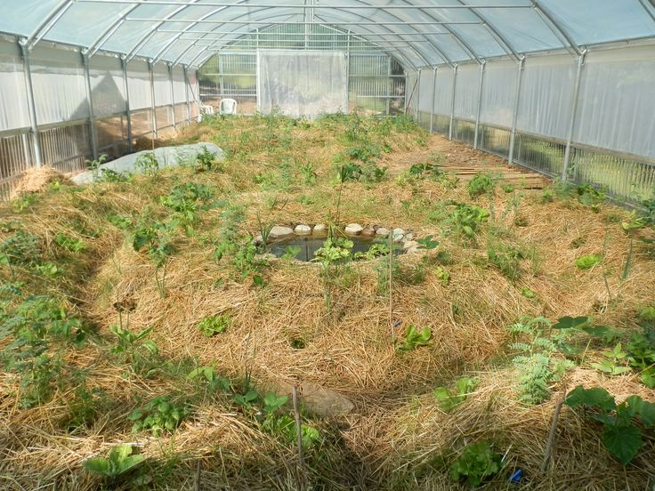17 Best images about Orto Sinergico e Biodinamico on Pinterest  Vegetables Vegetable garden