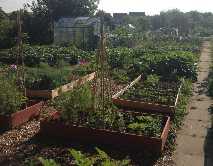 25 Best Allotment Ideas On Pinterest When To Plant Garden