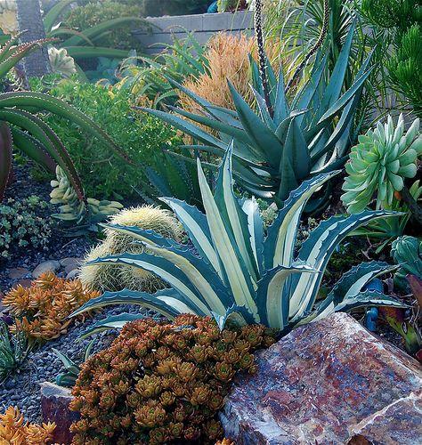 1000 ideas succulent landscaping
