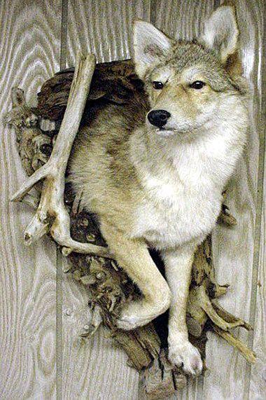 Pictures Turkey Deer Wild Woods