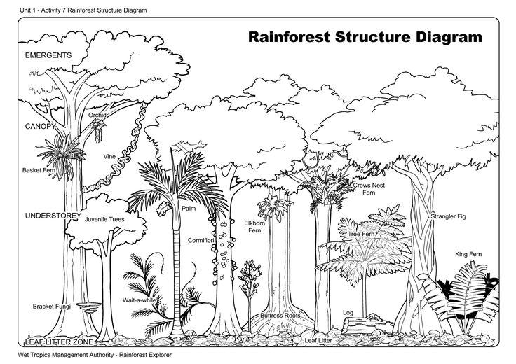 tree layers diagram