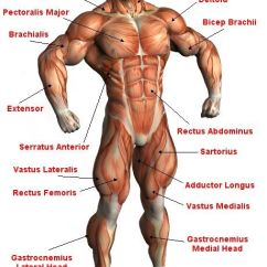 Human Skeleton Diagram Without Labels Front Avionics Wiring Diagrams Freefitnessguru - Frontal Muscle Anatomy | Workout Ideas Pinterest Tutorials, And ...