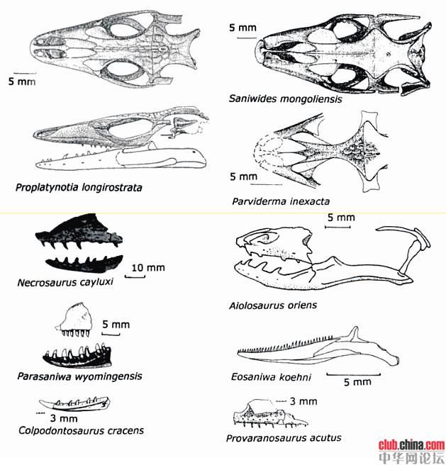 55 best images about fossil lizards on Pinterest