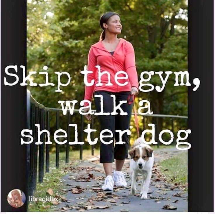 Skip The Gym Walk A Shelter Dog Pawsitivematch Www