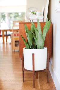 25+ best ideas about Modern Plant Stand on Pinterest
