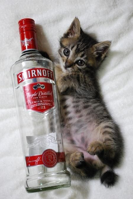 In my life Smirnoff and Posts on Pinterest