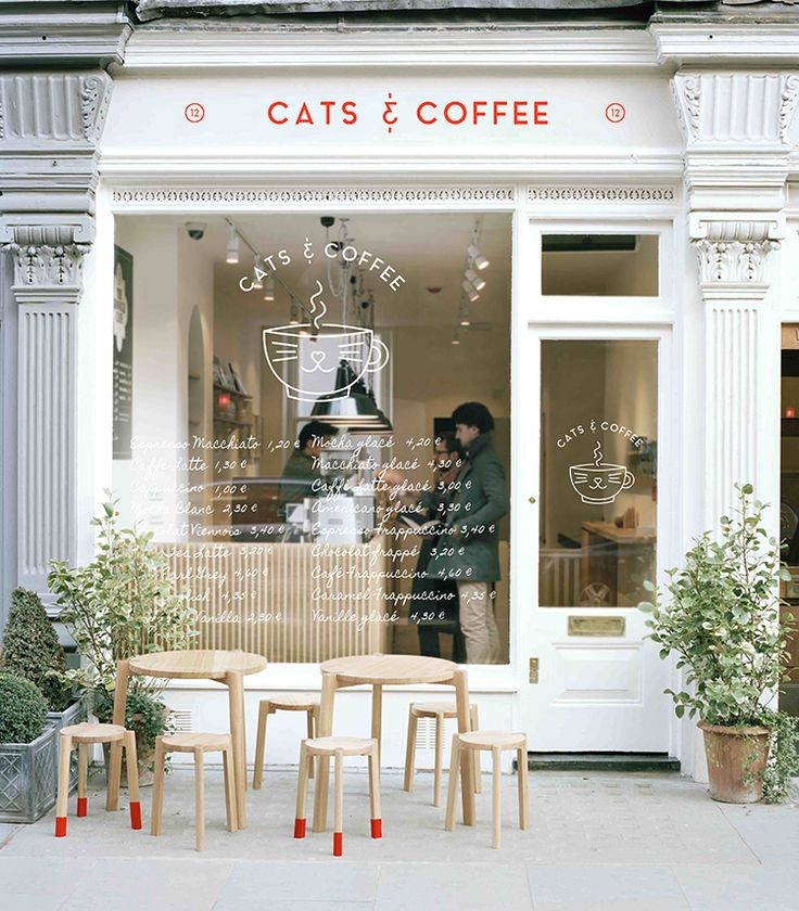 Cats & Coffee, combining the two things I love | Mishmag