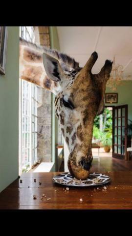 25 Best Ideas About Funny Wild Animals On Pinterest
