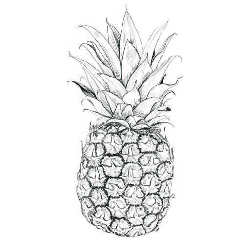 1000 Ideas About Pineapple Drawing