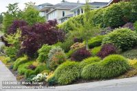 1203498 Grasses, shrubs & small trees in front-yard garden ...