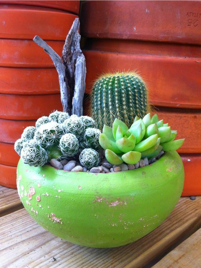 103 Best Images About Cactus And Cactus Gardens On Pinterest