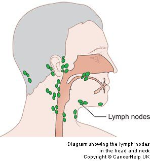 where are my lymph nodes diagram coil pack wiring pictures of node neck rock cafe showing the in head and