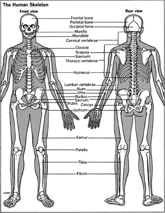 16 best Science Articles about the Human Body images on