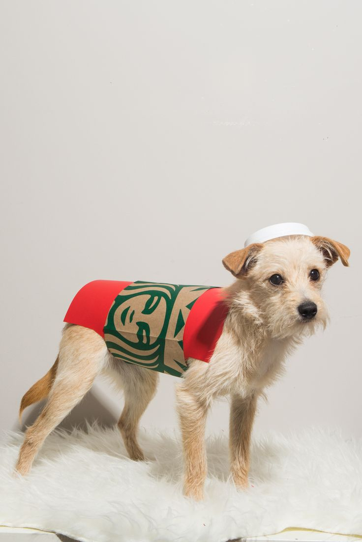 Best 25+ Dog christmas costumes ideas on Pinterest