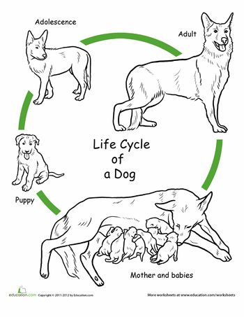 114 best images about Animal Life Cycles on Pinterest