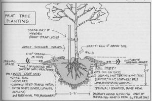 Nice article on care for bare root fruit trees | Jardin