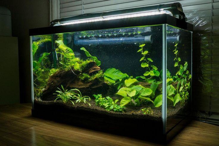 10g ShrimpCoryAnubias LowTech Tank  The Planted Tank Forum  Aquarium Ideas  Pinterest