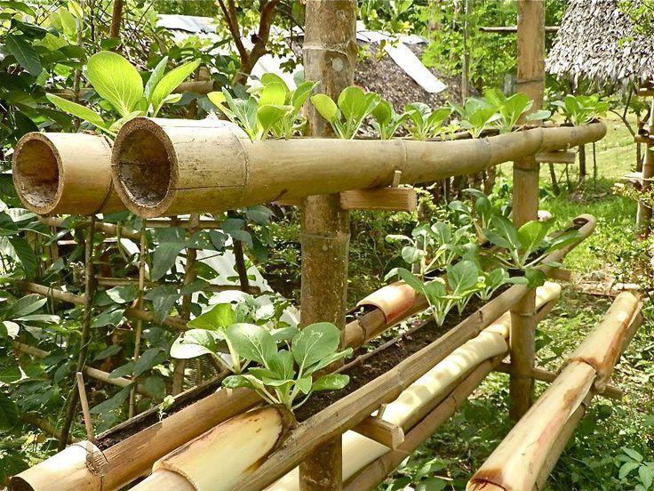 25 Best Ideas About Bamboo Planter On Pinterest Bamboo Garden