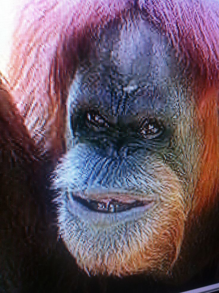 An Ape Down Syndrome Orang Utan He Looks So Cute