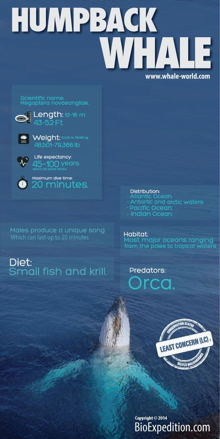 Best 25 Whale Facts Ideas On Pinterest Blue Whale Facts