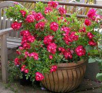 1000+ images about flower pot arrangements on Pinterest ...