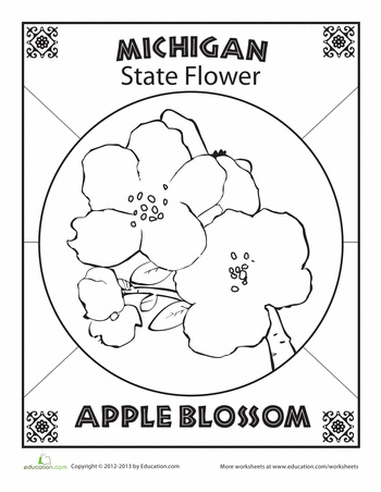 Michigan State Flower Coloring Page Coloring Pages