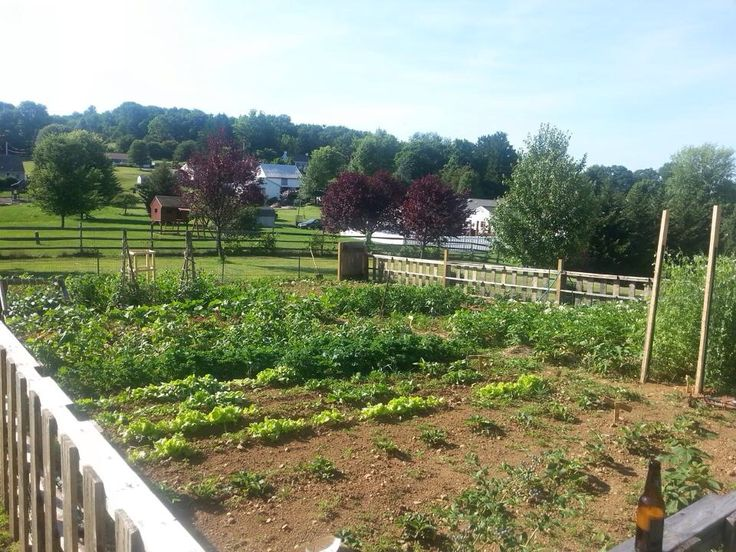 Large Vegetable Garden Layout In Full Bloom Ideas For