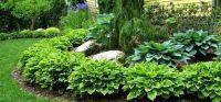 landscape with hostas   Hosta Garden   Reder Landscaping ...