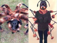 Best 25+ Spider dog ideas on Pinterest | Dog spider ...