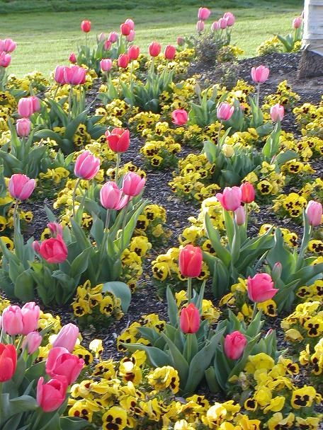 29 Best Images About Front Flower Bed Ideas On Pinterest Garden