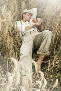 cornfield violinplayer