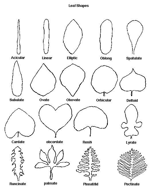 17 Best ideas about Plant Identification on Pinterest