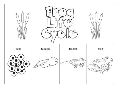 The Paper Maid: Frog Life Cycle http://www.pinterest.com