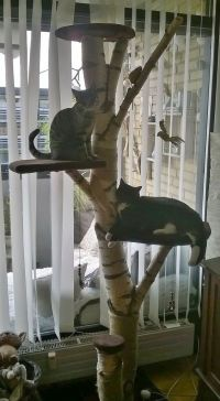 25+ best ideas about Homemade Cat Trees on Pinterest