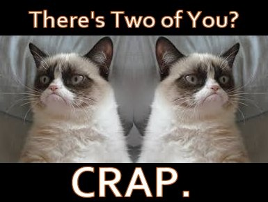 Grumpy Cat Wishes Twins A Happy Birthday Funny Cute Wrong Pinterest Grumpy Cat
