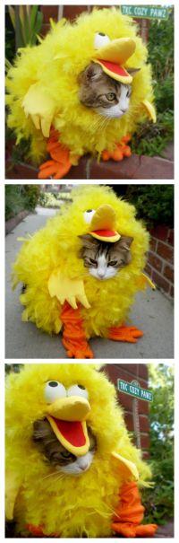 Best 25+ Big bird costume ideas on Pinterest | Big bird ...
