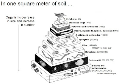 17 Best images about Teaching: Soil Science/Natural