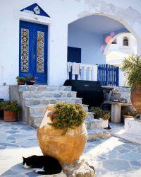 Greece Photography - Santorini Photograph - Black Cat ...