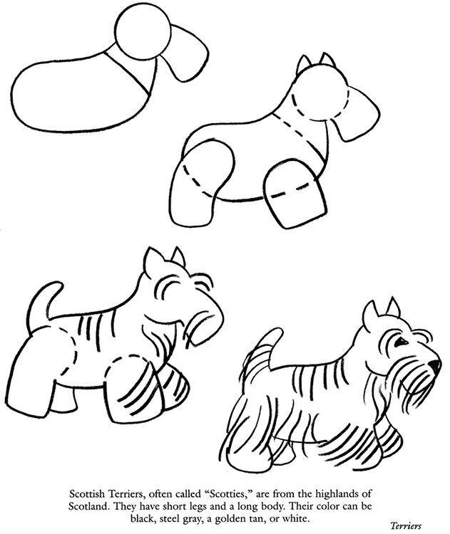 154 Best Images About Drawing Tutorials Cats And Dogs On