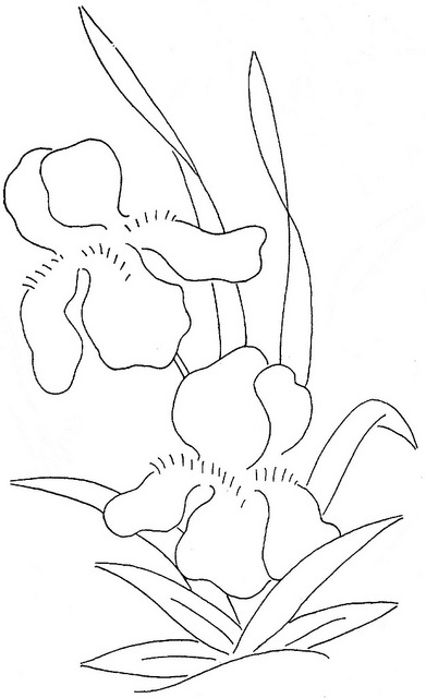 17 Best images about line drawings of irises on Pinterest