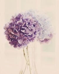 17 Best ideas about Purple Wall Art on Pinterest | Purple ...