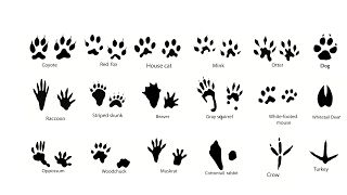 Week 1 Animal Identification PowerPoint for Cub Scouts