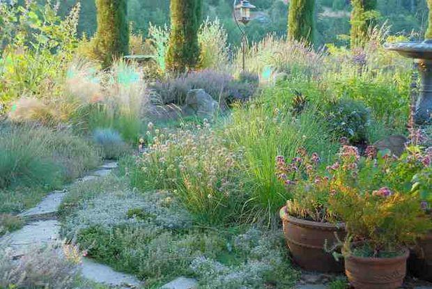 Best 25 Water Wise Landscaping ideas on Pinterest